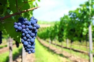 Coeur d'Alene's Wine Extravaganza