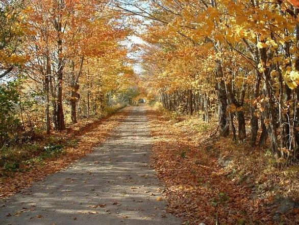 fall trail 1562337