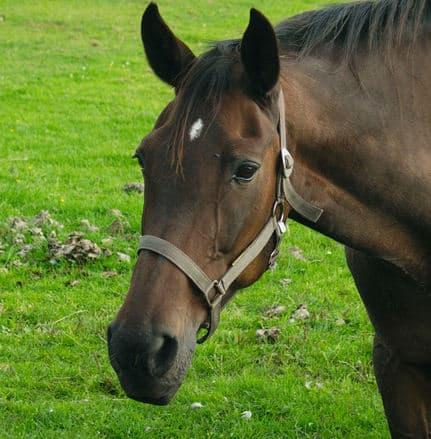 horse 1555274