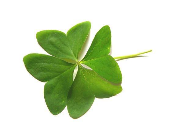 four leaf clover 1395423